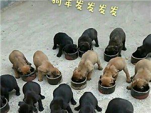 几张祝福图祝大家狗年吉祥