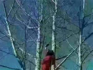 乡里信号不好,我还在树上等你的红包不发我