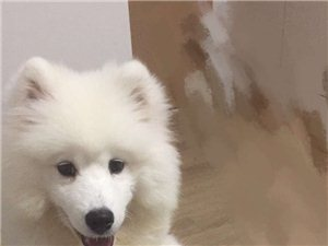 请求大家帮我找小狗