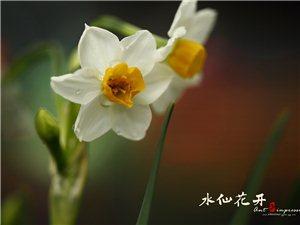 水仙花�_,香�馑囊�