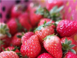 来来来,摘草莓了