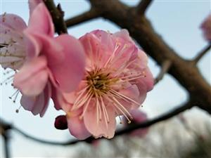 腊梅迎春!