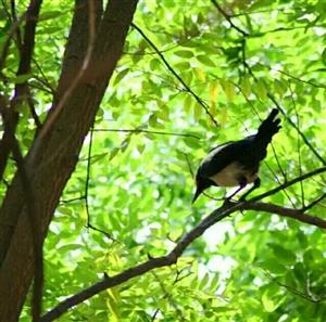 在山阳桃园小区听见春天里的一声鸟鸣