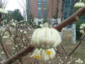 早春二月的花儿你知道是什么花儿吗?