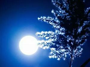元宵夜清辉如霜静无声玉兔常娥桂树冷