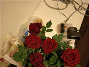 这是月季还是玫瑰