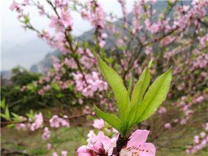 踏春十里赏桃花