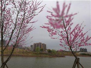 春天的湿地公园