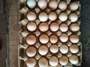 散养笨鸡蛋,质优价廉,欢迎购买,微信号,