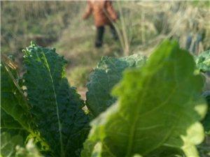 挖野菜,有认识的吗。