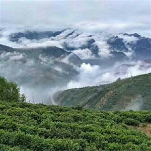 有一种喜欢,叫我想约你去莲花茶厂喝茶