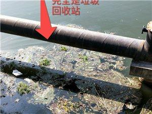 邓关电站旁边污水严重,无人问津!