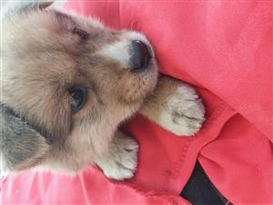 希望有爱心的人来领养狗狗