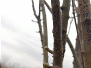 向阳花木早逢春