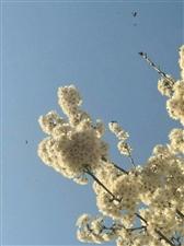 《我在春天等你》