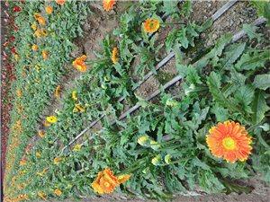 """一花一世界,一朵朵组成一片片花的海洋;花又给了我许多思考,""""人生如花,花如人生。""""一朵朵"""