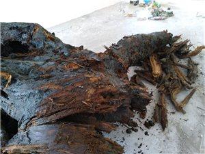 刚挖出来的阴沉木不知道值不值钱