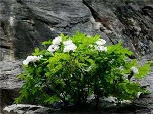 忍一忍,春暖花开,让一让,柳暗花明。生活中的好多人,不一定针锋相对;人生中的好多事,不一定据理力争。