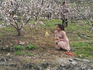 松桃这里有十里桃花