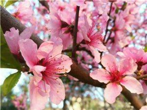 三月春风,花儿开得惹人爱...