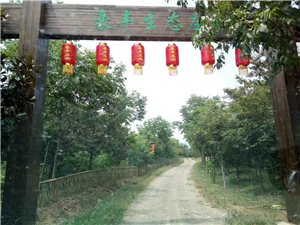 郎溪县豪丰生态白茶带您享健康幸福人生