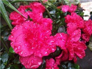 下雨了,爱你?