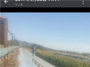 凌源四官营子窑上村4组出售三个大棚230米