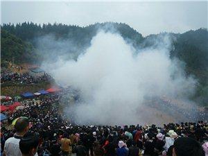 优德88金殿县东朗镇摆里村举行牛打架活动