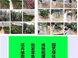 花卉植物專業養護