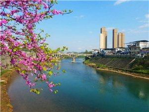 春满凤城惬意浓。