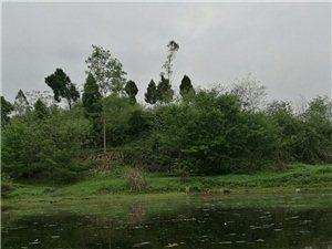仁寿县富加镇农旺乡褚橙种植计划