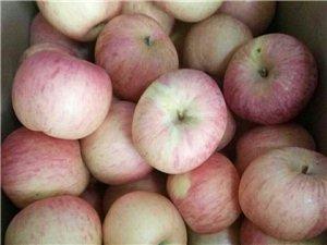 出售红富士苹果