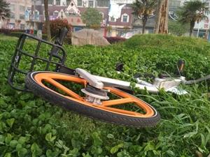共享单车,你在枝江好吗
