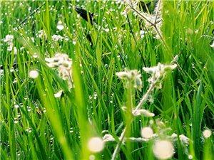 春暖花开,春色撩人