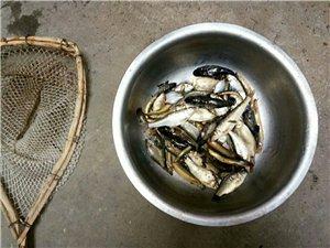 清水鱼,白莲花,有了下酒菜