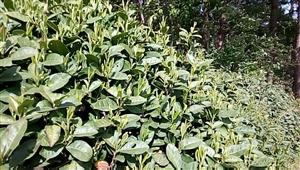 原生种群,兰香薰染,高山斜谷,丛林精华……