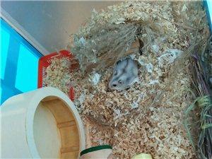 有人要�B�}鼠��