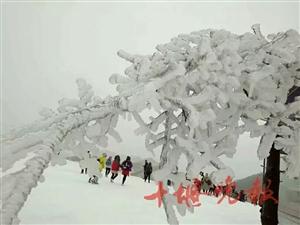十堰晚报消息,神农架下雪了!