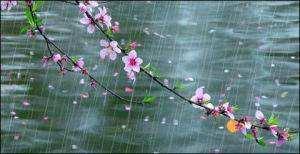 七绝---【醉中听雨】