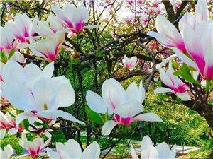 七律----【春渐深】
