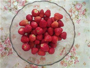 邀您一起来吃草莓