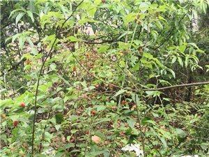 天然水果,无添加,无污染。