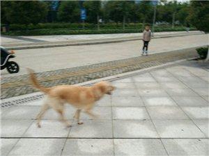 �W林公�@里的各�N狗??
