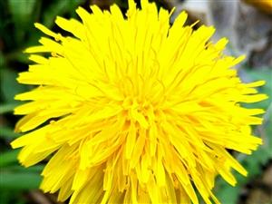 原野中的小花,真让人可爱!