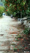 家乡的石榴花