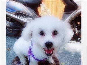 3�l狗狗低�r1000出售