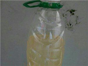 化州市,合江镇,合江中学,长年以来学生宿舍自来水很差,像江里面的水一样都没经过处理和过滤直接抽上来给