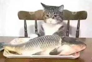 我在海上抓了一条鱼死了悲伤不已,我想给它火葬,把鱼骨灰撒回海洋,让它回到母亲的怀抱,谁知道那东西