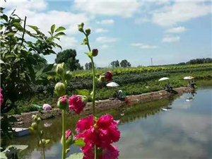 亲爱的朋友们,在这个桃红柳绿的季节里,每一个人都想远离都市喧嚣,觅一处风景秀丽的地方,来领略山水放飞