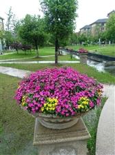 花儿朵朵为你开